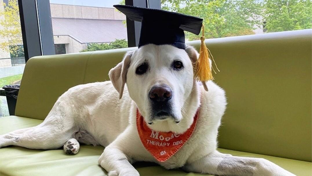 Poznajcie dr. Moose'a. Psa, który otrzymał stopień naukowy doktora
