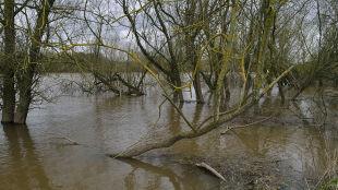 Pogotowie przeciwpowodziowe w części Śląska. Synoptycy alarmują