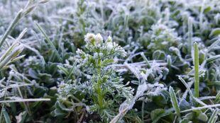 Zimni ogrodnicy. Skąd wziął się ten fenomen klimatyczny