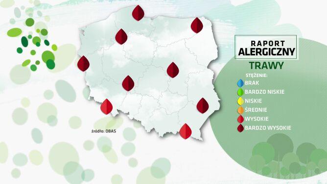 Raport alergiczny. Pylenie traw potrwa dłużej niż zwykle